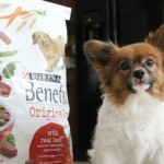 Mealtime with Our Dog is Healthy with a Side of Happy