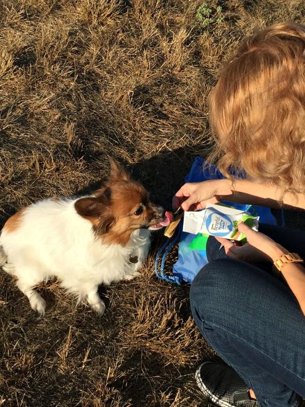 National Dog Week Beneful-06