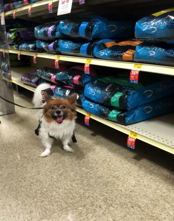 purina bright minds pro plan dog food at PetSmart