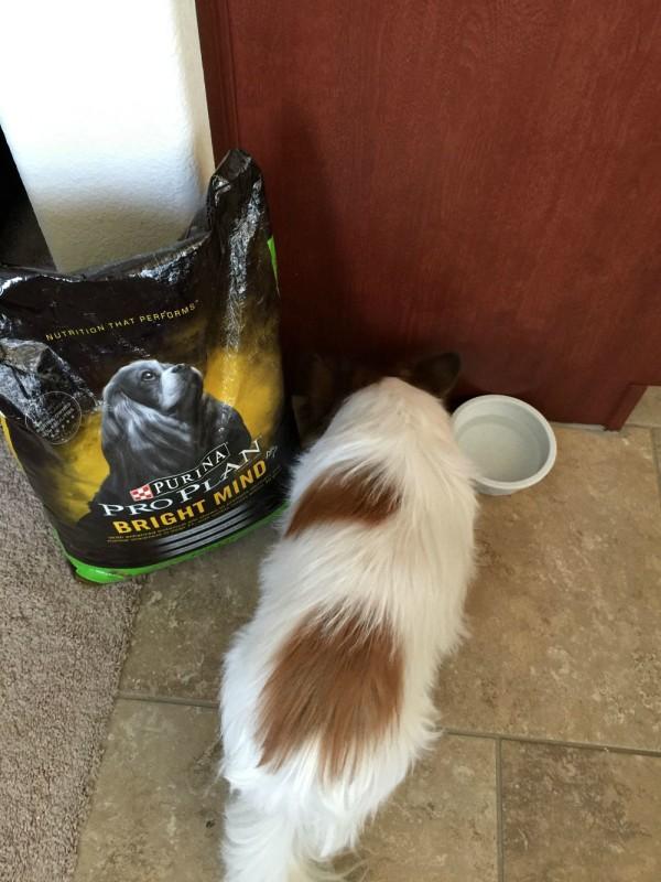 purina bright minds pro plan dog food