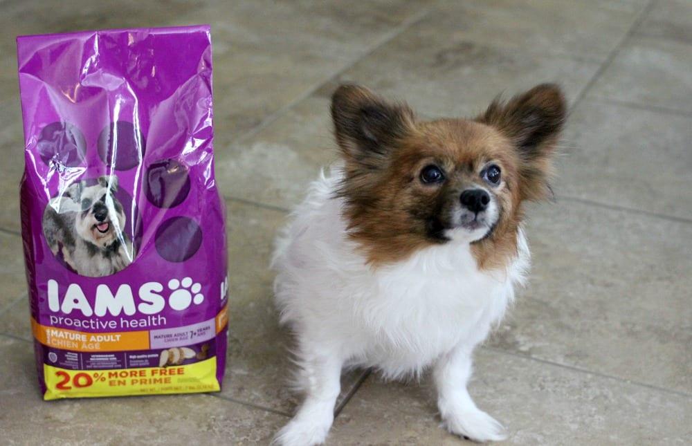iams dog food-01
