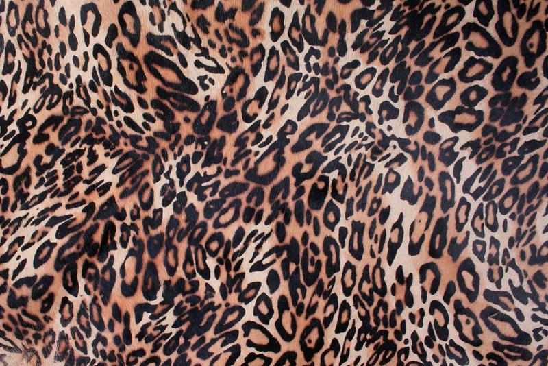 Fall 2019 Fashion Trend Alert: Leopard Print!